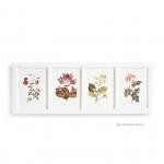 ภาพพิมพ์ลายดอกไม้ 4 ช่อง กรอบไม้สีขาว