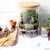 DIY สวนในขวดแก้ว( terrarium ) เรื่องสนุกสำหรับทุกคนในครอบครัว