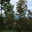 ที่ดิน 100 ไร่ เนินวิวสวย เชียงใหม่ &#x2605 100 rai of land overlooking the beautiful Chiang Mai &#x2605 thumbnail 6