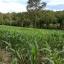ที่ดิน 100 ไร่ เนินวิวสวย เชียงใหม่ &#x2605 100 rai of land overlooking the beautiful Chiang Mai &#x2605 thumbnail 1