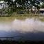 ที่นาพร้อมบ่อปลา 4 ไร่กว่า เชียงใหม่ &#x2605 4 rai than of farmland and fish ponds in Chiang Mai &#x2605 thumbnail 6