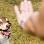 ซีซาร์เวย์ คำนิยมโดย ประธานสหพันธ์ผู้เชี่ยวชาญด้านสุนัขนานาชาติ
