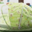 ชุดที่นอนมุ้งขนาดใหญ่(ถอดแยกซักได้) สีเขียว thumbnail 3